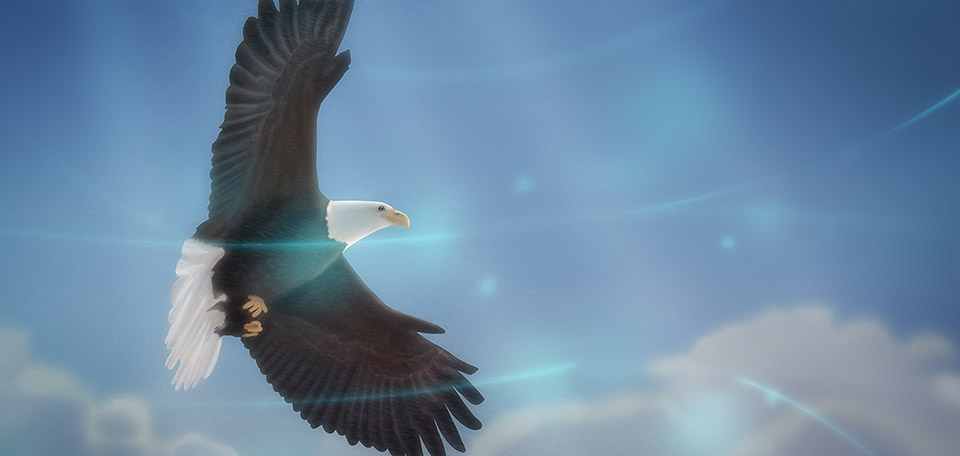 Be as free as a bird — move like the wind, chase your dreams, and soar on high! -- Bird of Freedom - Digital Art by Matthias Zegveld