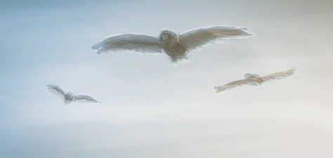 Eagles Are Coming - Digital Art by Matthias Zegveld