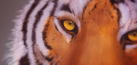Eye of the Tiger - Digital Art by Matthias Zegveld