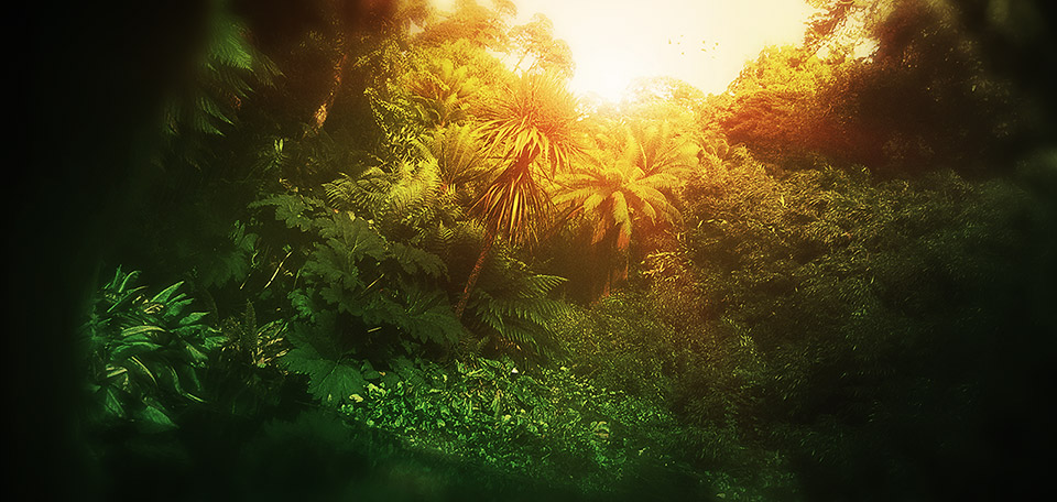 This Art pictures a beautiful scenery inside the jungles of Africa, with the sunlight rising in the morning. -- Light in the Jungle - Art Numérique par Matthias Zegveld