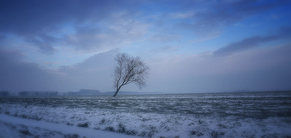 Rising tall in a vast open landscape, this tree is a mark in a land covered in snow during one of the Dutch cold winters. -- The Lonely Tree - Digital Art by Matthias Zegveld