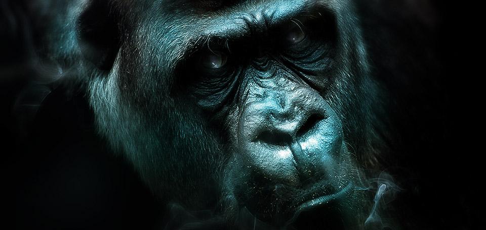 Angry Gorilla - Digital Art by Matthias Zegveld