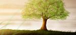 Art - Tree of Life