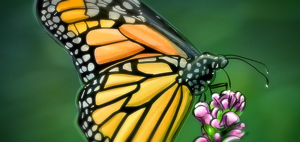 This astonishing beautiful butterfly takes her time gathering nutrition from a pink flower. -- Wonderful Butterfly - Digital Art by Matthias Zegveld